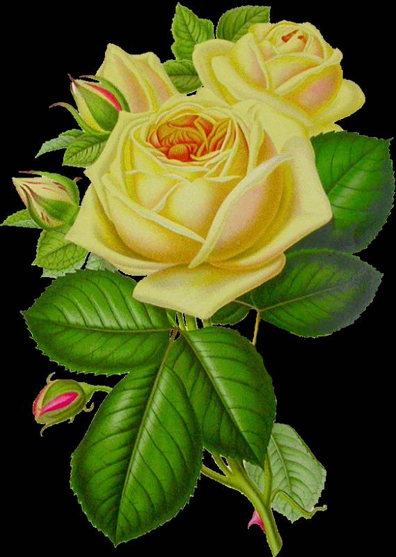 Картинки анимации цветы розы